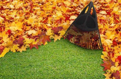 leaf-rake-web-1024x829